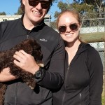 Peggy the brown and white Portuguese Water Dog puppy meets her new owners.  She'll be ready to go in 4 weeks.