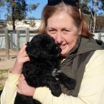 Portuguese Water Dog puppy, black, from Bluegrace.